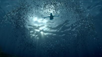 hola canarias peces_02